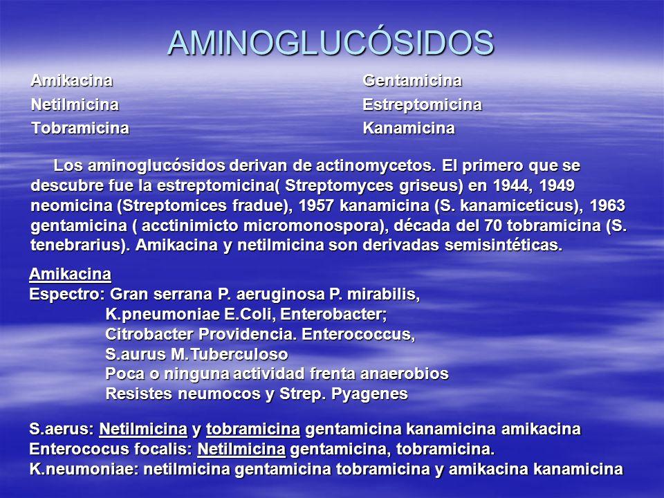 AMINOGLUCÓSIDOS AmikacinaGentamicina NetilmicinaEstreptomicina TobramicinaKanamicina Los aminoglucósidos derivan de actinomycetos. El primero que se d