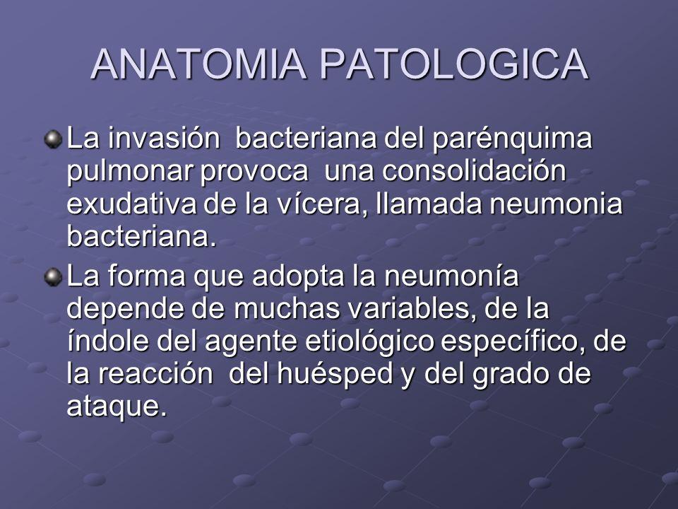 ANATOMIA PATOLOGICA La invasión bacteriana del parénquima pulmonar provoca una consolidación exudativa de la vícera, llamada neumonia bacteriana. La f