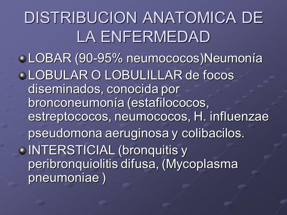 DISTRIBUCION ANATOMICA DE LA ENFERMEDAD LOBAR (90-95% neumococos)Neumonía LOBULAR O LOBULILLAR de focos diseminados, conocida por bronconeumonía (esta