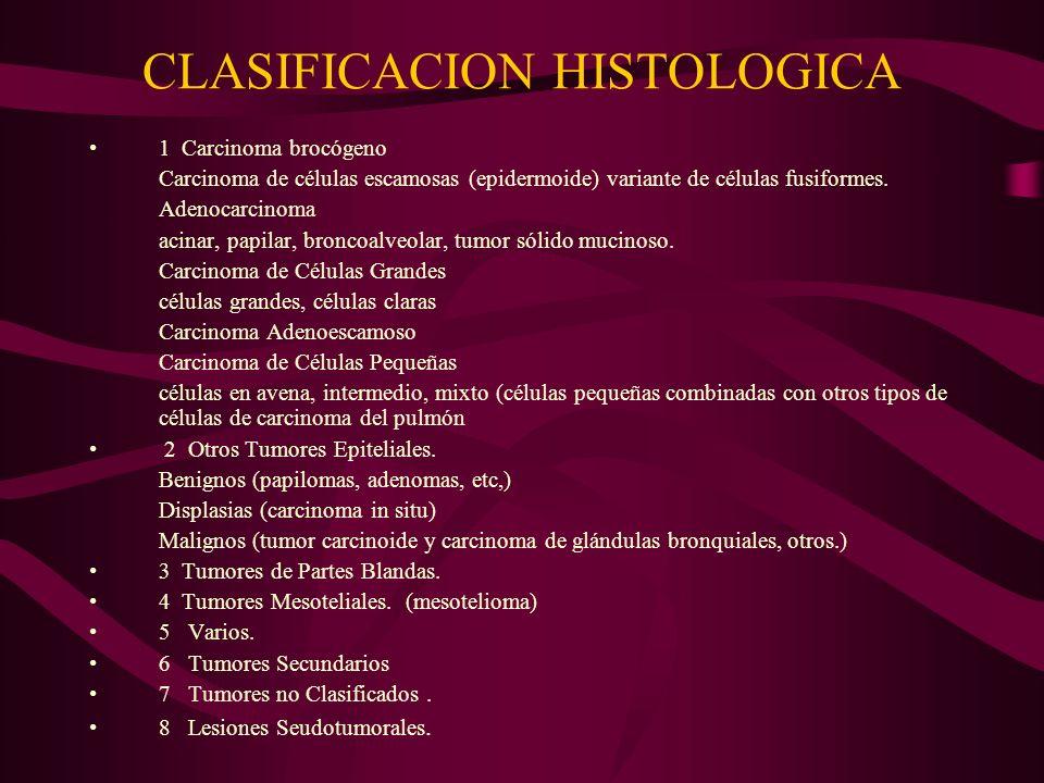 CLASIFICACION HISTOLOGICA 1 Carcinoma brocógeno Carcinoma de células escamosas (epidermoide) variante de células fusiformes. Adenocarcinoma acinar, pa