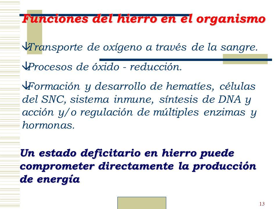 Dr. Carlos Guillén13 â Transporte de oxígeno a través de la sangre. â Procesos de óxido - reducción. â Formación y desarrollo de hematíes, células del