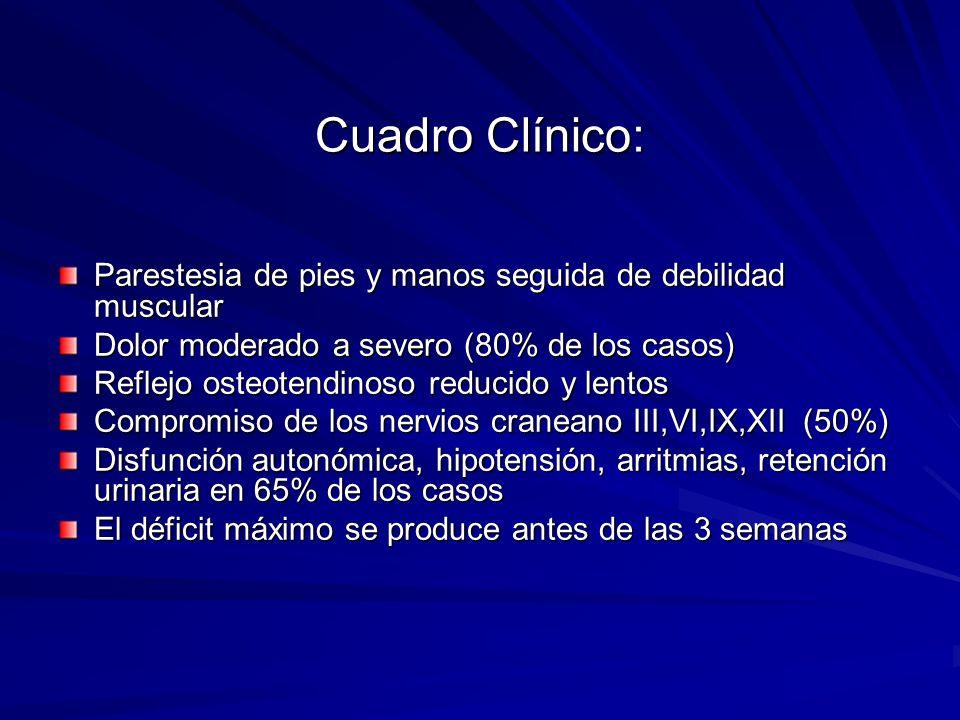 Cuadro Clínico: Parestesia de pies y manos seguida de debilidad muscular Dolor moderado a severo (80% de los casos) Reflejo osteotendinoso reducido y