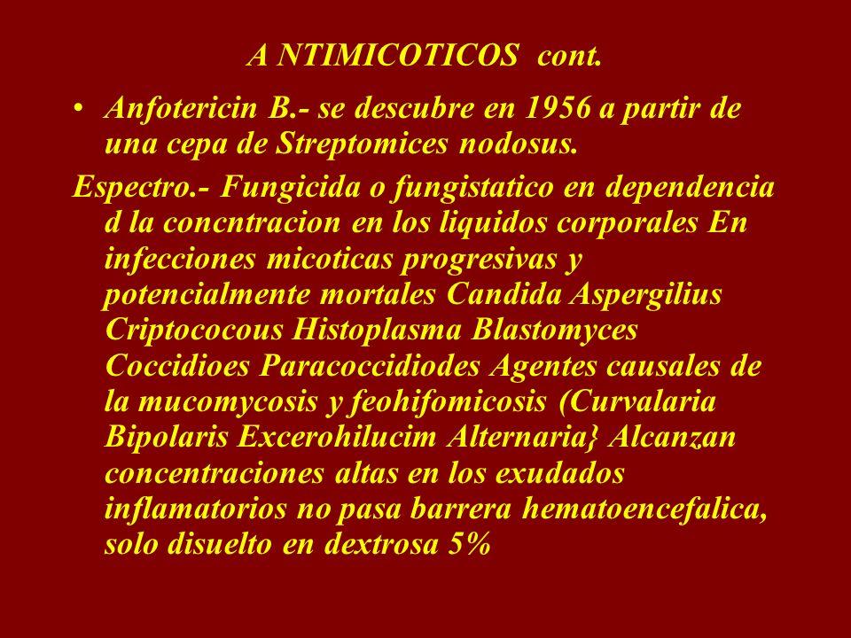 A NTIMICOTICOS cont. Anfotericin B.- se descubre en 1956 a partir de una cepa de Streptomices nodosus. Espectro.- Fungicida o fungistatico en dependen
