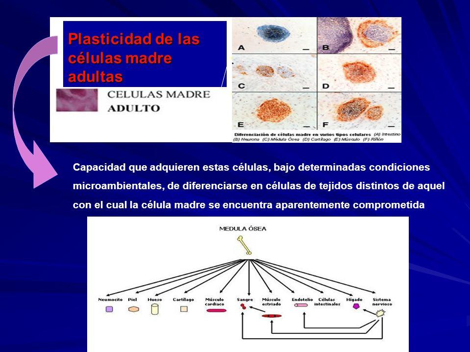 Plasticidad de las células madre adultas Capacidad que adquieren estas células, bajo determinadas condiciones microambientales, de diferenciarse en cé