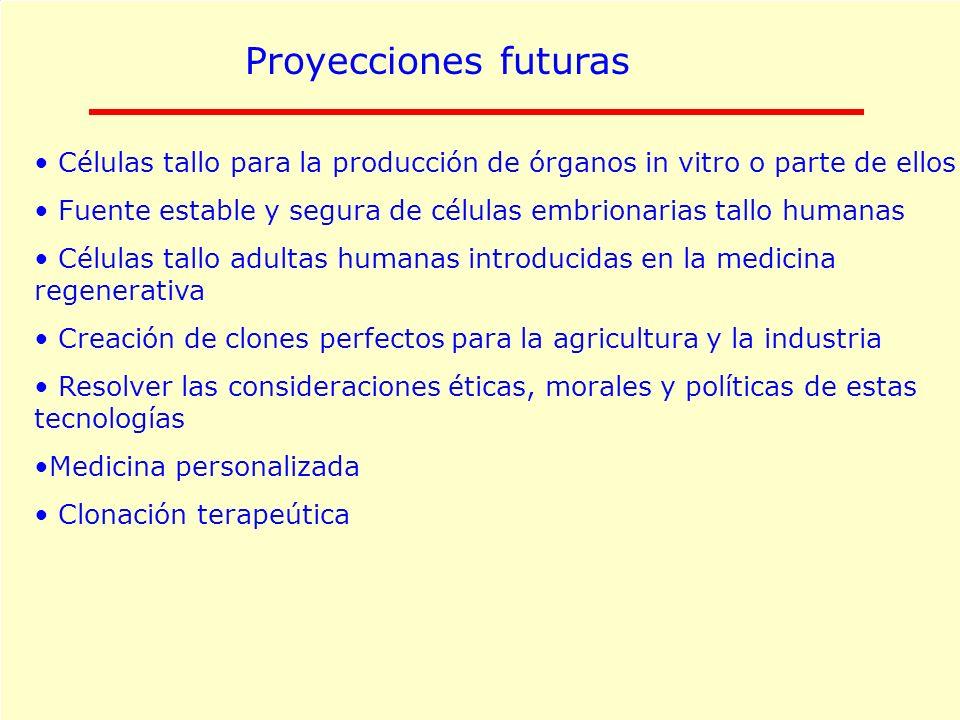 Proyecciones futuras Células tallo para la producción de órganos in vitro o parte de ellos Fuente estable y segura de células embrionarias tallo human