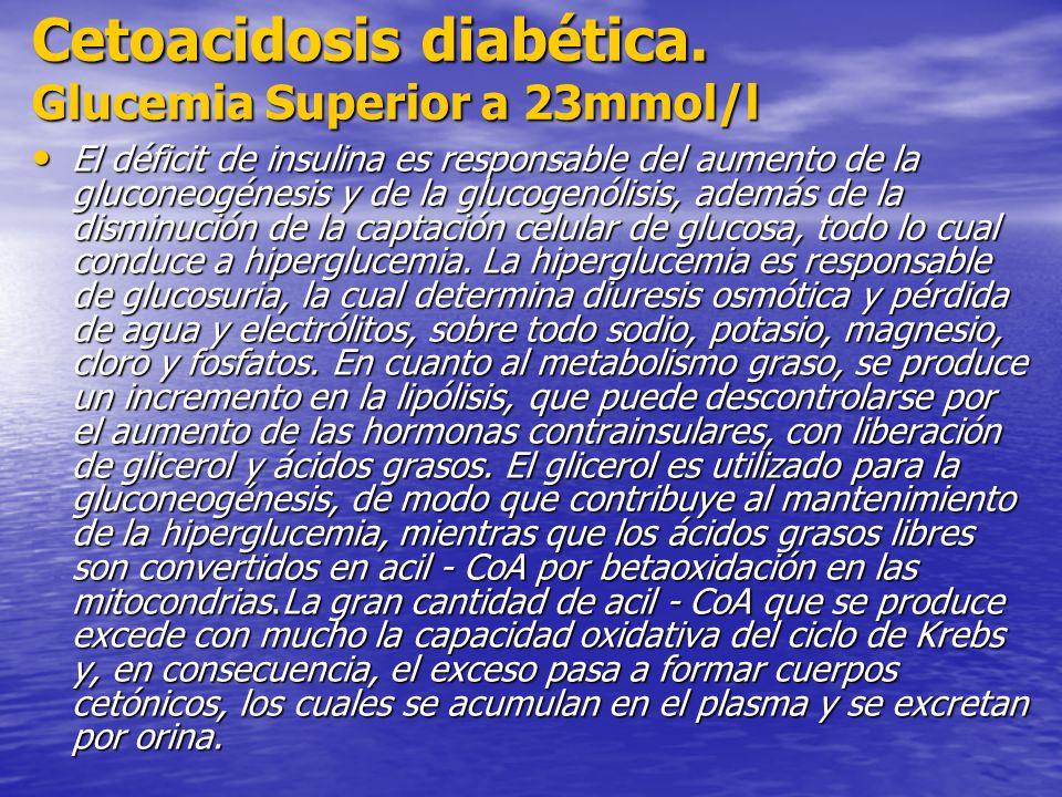 Cetoacidosis diabética. Glucemia Superior a 23mmol/l El déficit de insulina es responsable del aumento de la gluconeogénesis y de la glucogenólisis, a