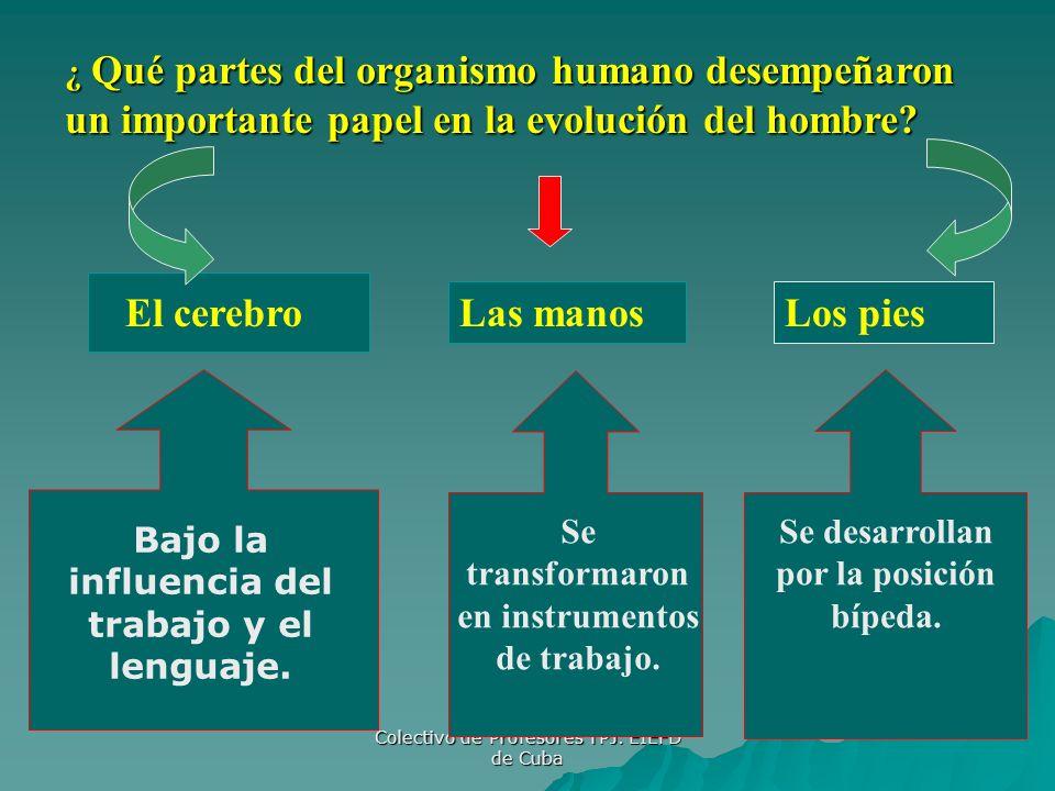 Colectivo de Profesores TPJ. EIEFD de Cuba ¿ Qué partes del organismo humano desempeñaron un importante papel en la evolución del hombre? El cerebro L