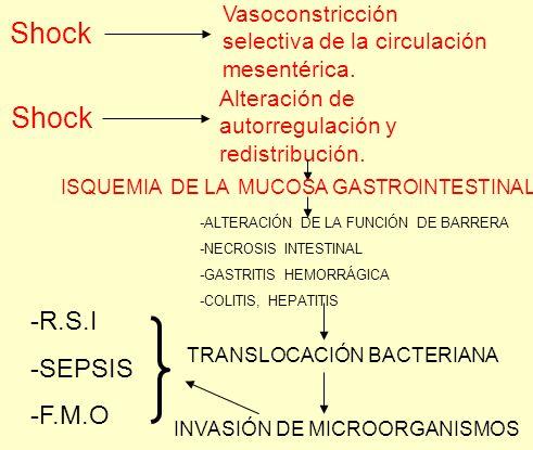 Shock Vasoconstricción selectiva de la circulación mesentérica. Shock Alteración de autorregulación y redistribución. ISQUEMIA DE LA MUCOSA GASTROINTE