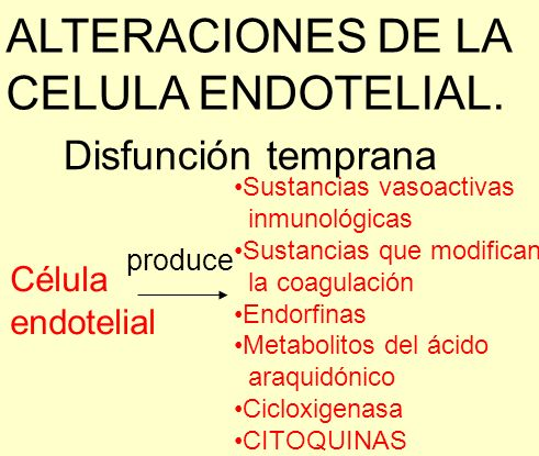 ALTERACIONES DE LA CELULA ENDOTELIAL. Disfunción temprana Célula endotelial produce Sustancias vasoactivas inmunológicas Sustancias que modifican la c