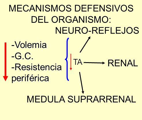 -Volemia-G.C.-Resistenciaperiférica TA NEURO-REFLEJOS RENAL MEDULA SUPRARRENAL MECANISMOS DEFENSIVOS DEL ORGANISMO: