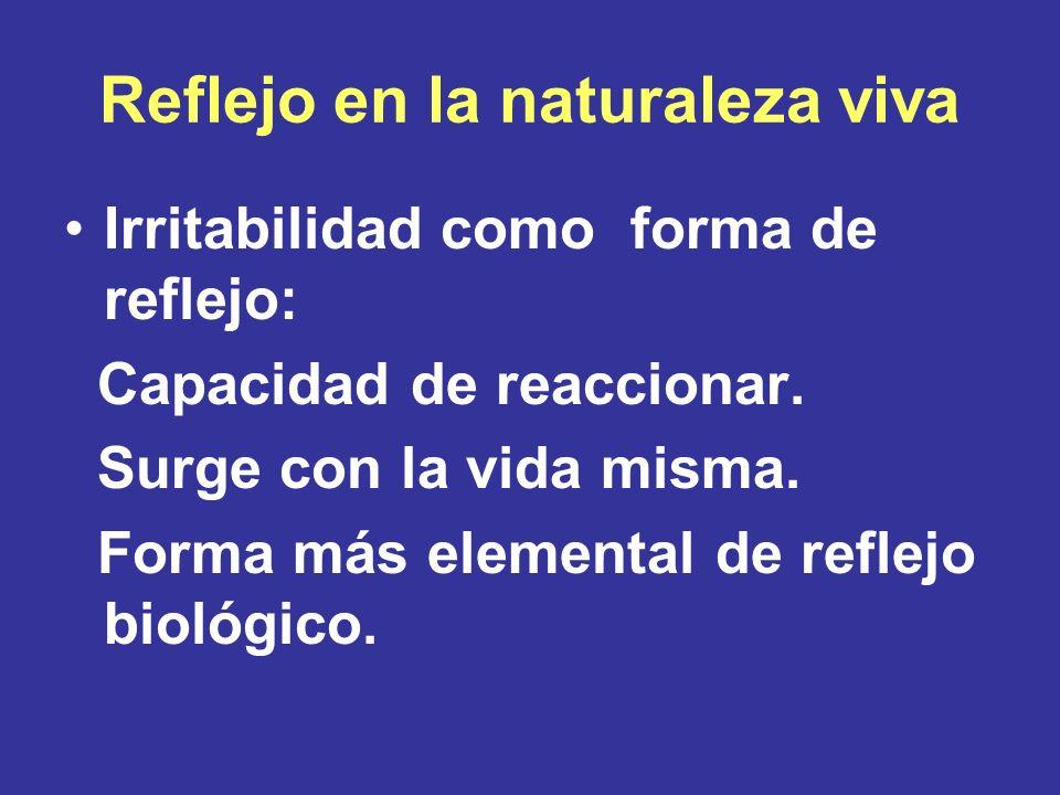 Reflejo en la naturaleza viva Irritabilidad como forma de reflejo: Capacidad de reaccionar. Surge con la vida misma. Forma más elemental de reflejo bi