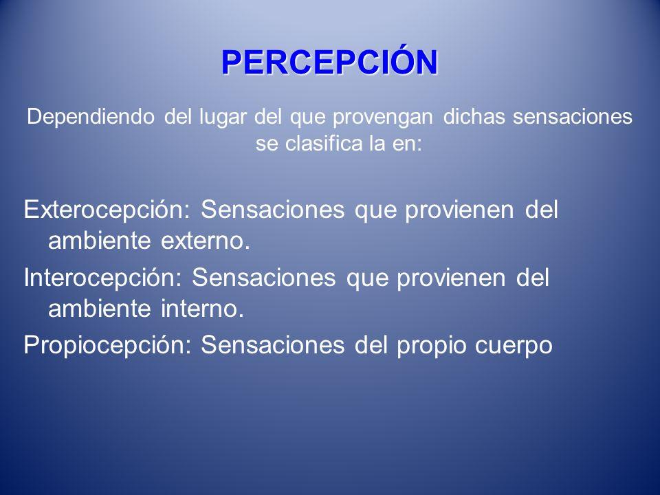PERCEPCIÓN Dependiendo del lugar del que provengan dichas sensaciones se clasifica la en: Exterocepción: Sensaciones que provienen del ambiente extern