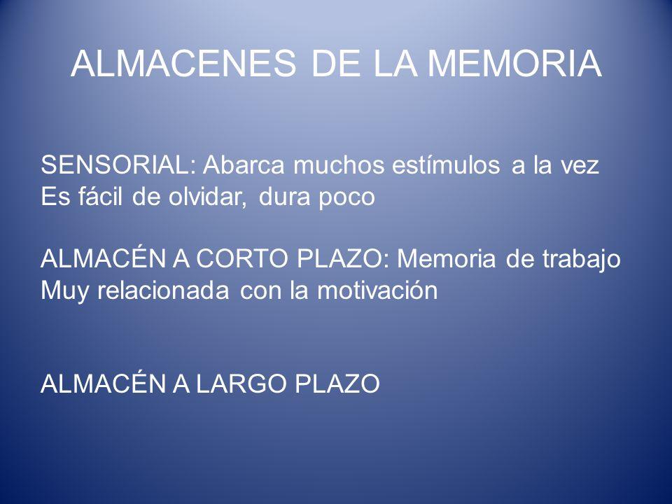 ALMACENES DE LA MEMORIA SENSORIAL: Abarca muchos estímulos a la vez Es fácil de olvidar, dura poco ALMACÉN A CORTO PLAZO: Memoria de trabajo Muy relac