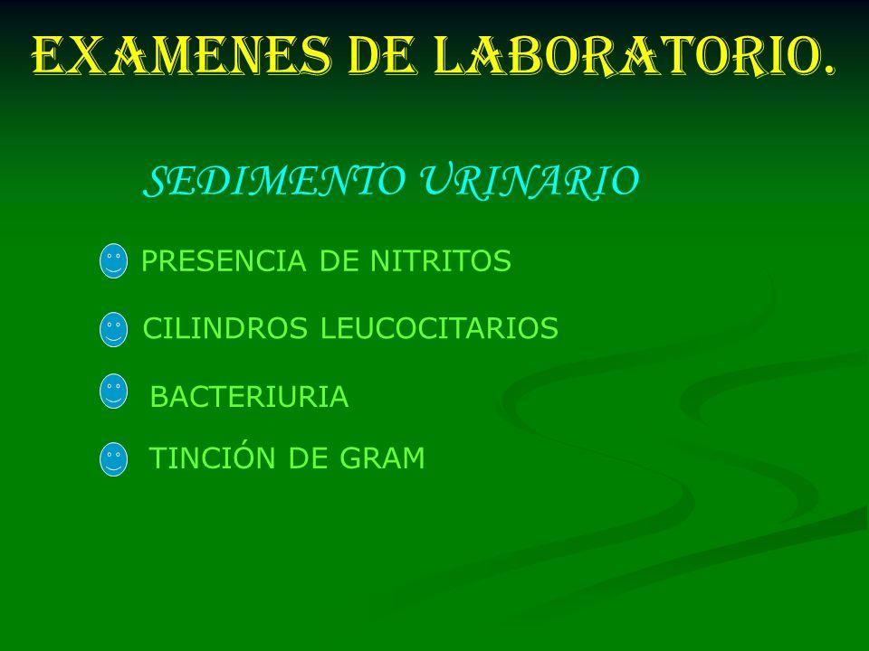EXAMENES DE LABORATORIO. PRESENCIA DE NITRITOS CILINDROS LEUCOCITARIOS BACTERIURIA TINCIÓN DE GRAM SEDIMENTO URINARIO