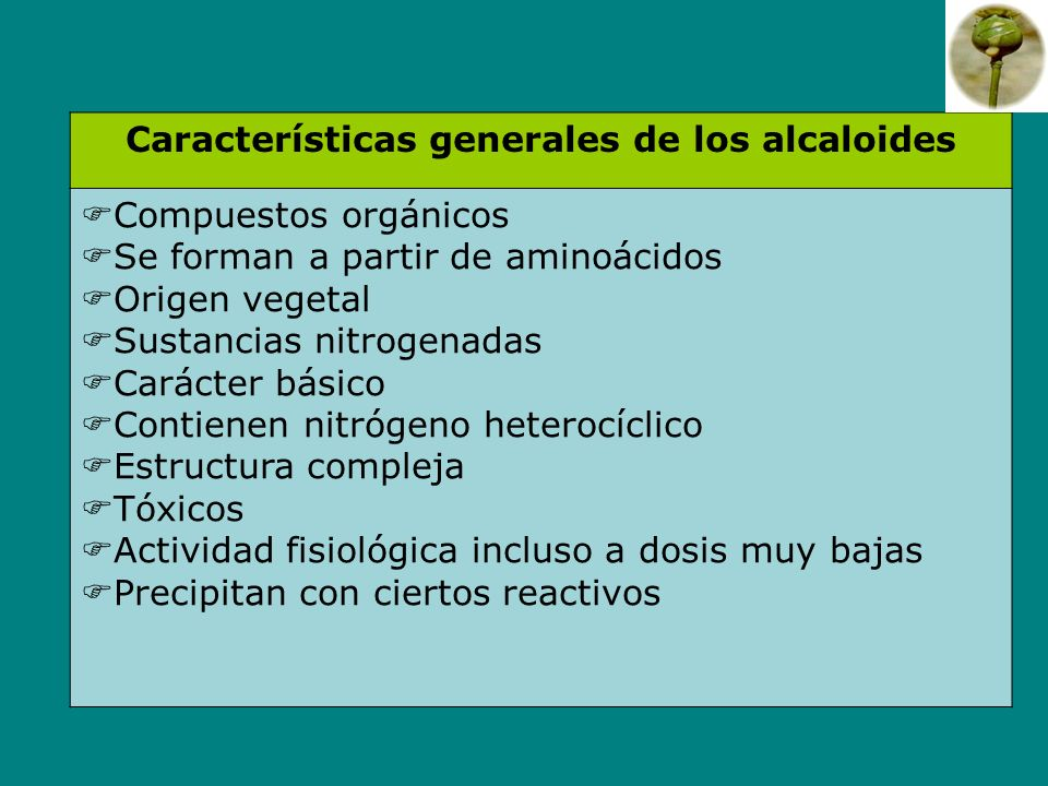 Características generales de los alcaloides Compuestos orgánicos Se forman a partir de aminoácidos Origen vegetal Sustancias nitrogenadas Carácter bás