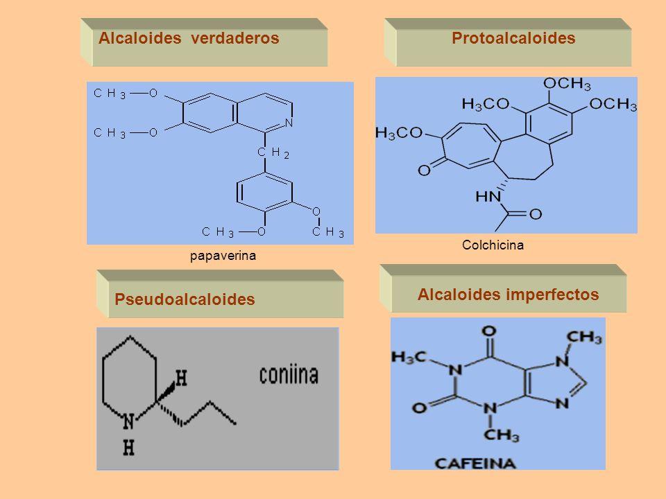 Alcaloides verdaderos Alcaloides imperfectos Protoalcaloides Pseudoalcaloides Colchicina papaverina