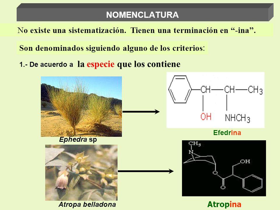 Ephedra sp Efedrina Atropa belladona Atropina 1.- De acuerdo a la especie que los contiene No existe una sistematización. Tienen una terminación en -i