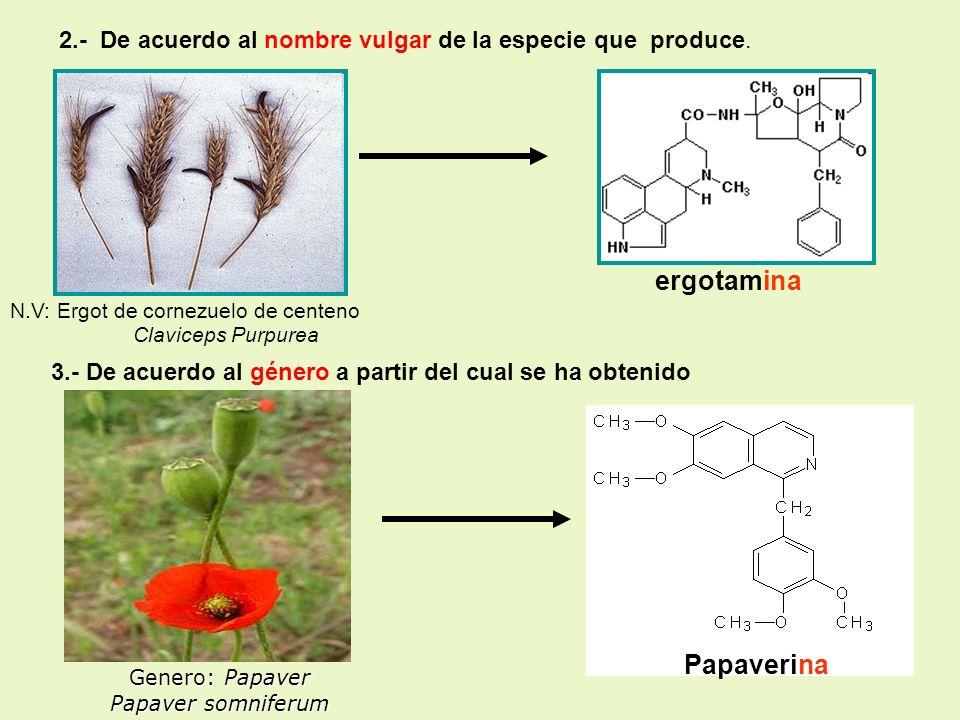 Claviceps Purpurea Genero: Papaver Papaver somniferum 2.- De acuerdo al nombre vulgar de la especie que produce. N.V: Ergot de cornezuelo de centeno 3
