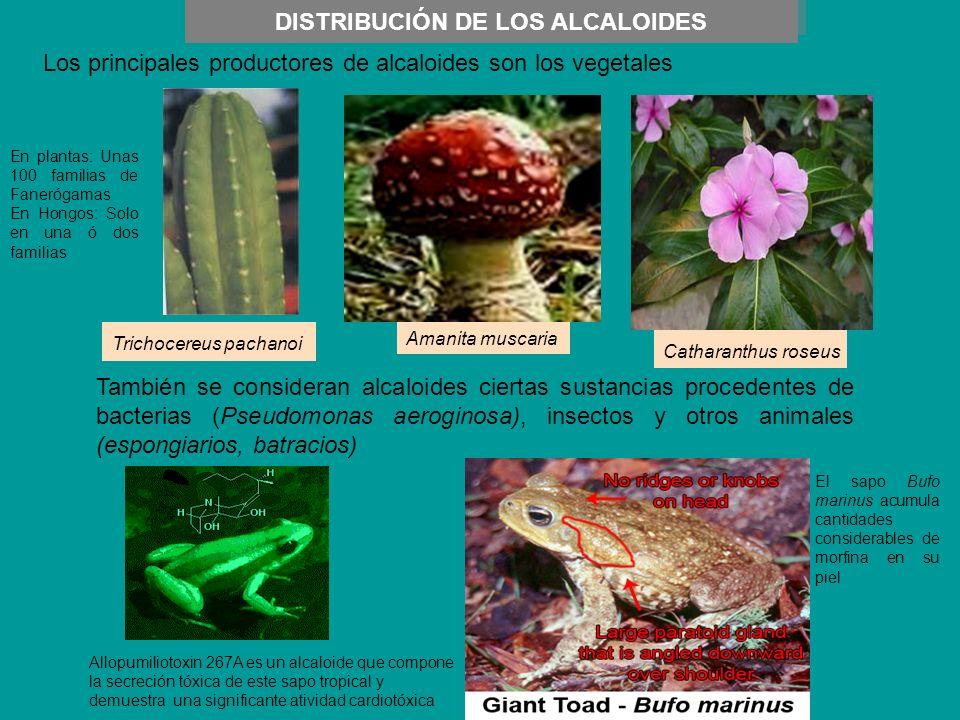 DISTRIBUCIÓN DE LOS ALCALOIDES Los principales productores de alcaloides son los vegetales También se consideran alcaloides ciertas sustancias procede