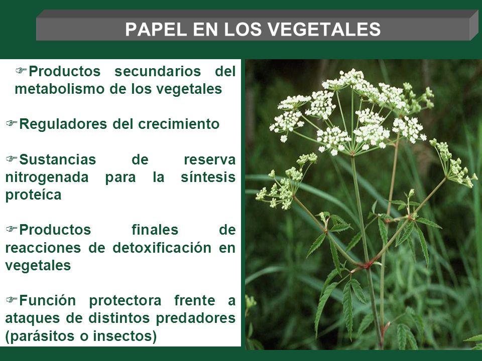 Productos secundarios del metabolismo de los vegetales Reguladores del crecimiento Sustancias de reserva nitrogenada para la síntesis proteíca Product