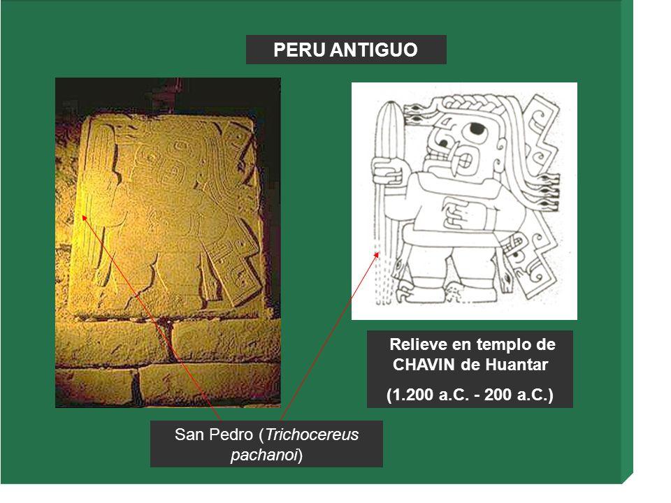 PERU ANTIGUO Relieve en templo de CHAVIN de Huantar (1.200 a.C. - 200 a.C.) San Pedro (Trichocereus pachanoi)