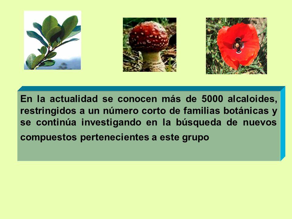 En la actualidad se conocen más de 5000 alcaloides, restringidos a un número corto de familias botánicas y se continúa investigando en la búsqueda de