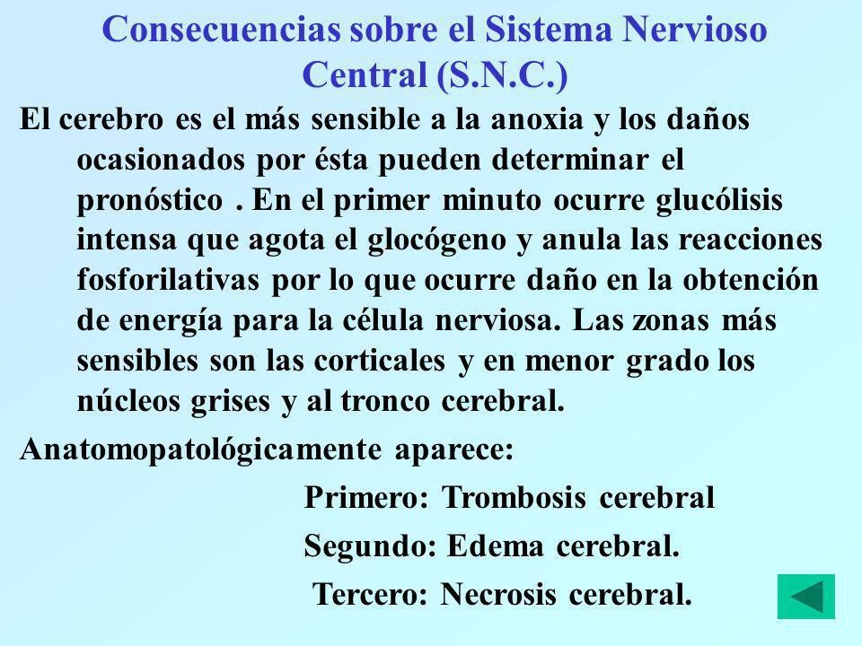 Consecuencias sobre el Sistema Nervioso Central (S.N.C.) El cerebro es el más sensible a la anoxia y los daños ocasionados por ésta pueden determinar