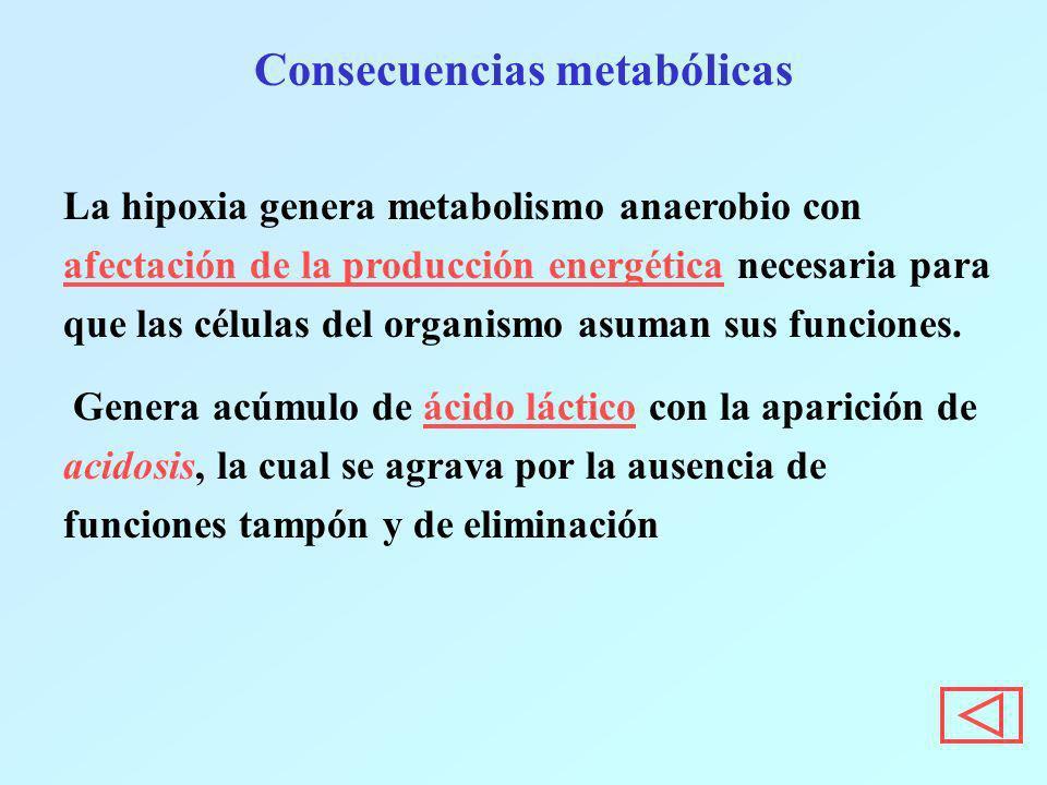 Consecuencias metabólicas La hipoxia genera metabolismo anaerobio con afectación de la producción energética necesaria para que las células del organi