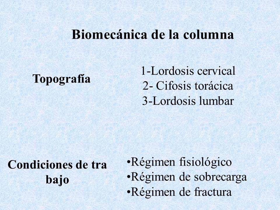 Biomecánica de la columna Topografía 1-Lordosis cervical 2- Cifosis torácica 3-Lordosis lumbar Condiciones de tra bajo Régimen fisiológico Régimen de