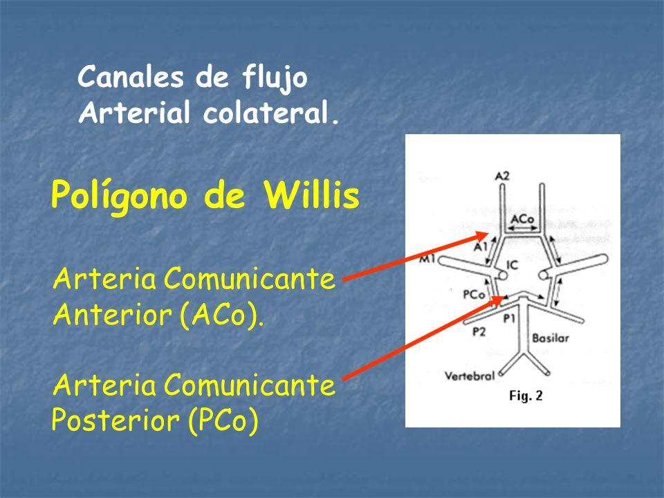 Canales de flujo Arterial colateral. Polígono de Willis Arteria Comunicante Anterior (ACo). Arteria Comunicante Posterior (PCo)