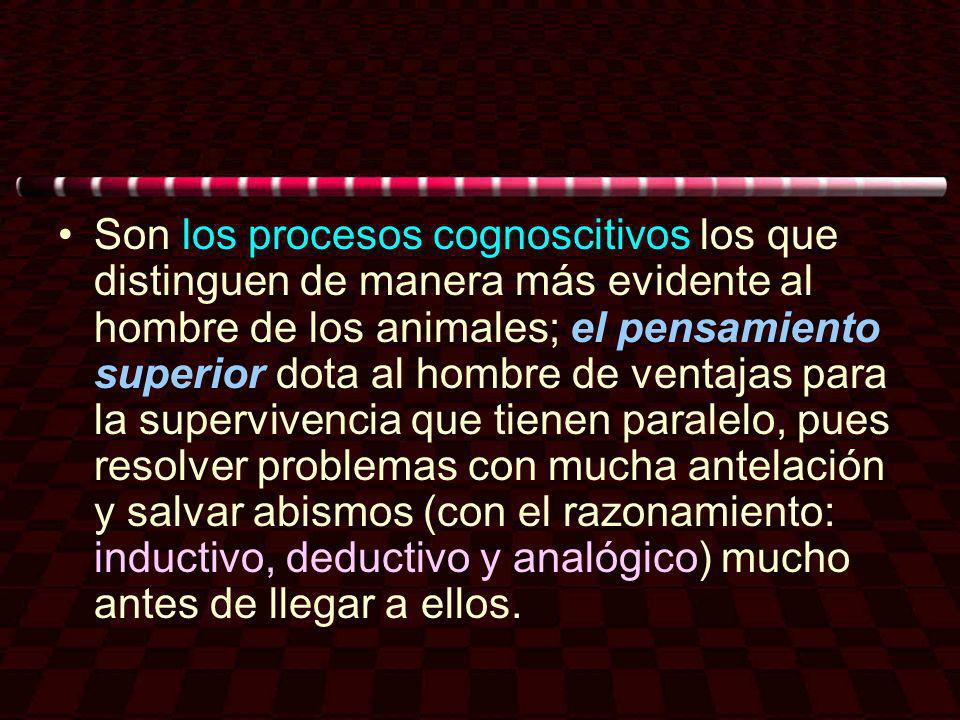 Son los procesos cognoscitivos los que distinguen de manera más evidente al hombre de los animales; el pensamiento superior dota al hombre de ventajas