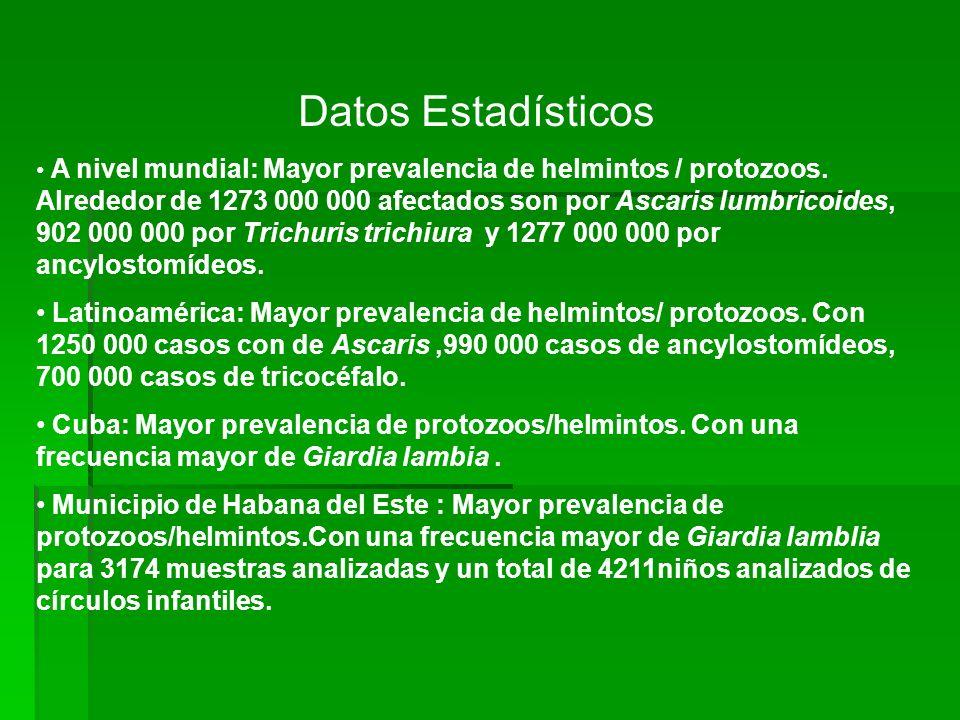 Datos Estadísticos A nivel mundial: Mayor prevalencia de helmintos / protozoos. Alrededor de 1273 000 000 afectados son por Ascaris lumbricoides, 902