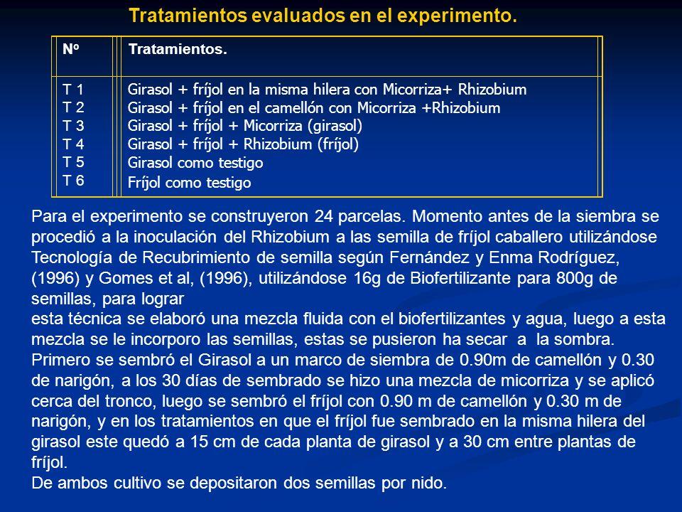 Tratamientos evaluados en el experimento. NoNo Tratamientos. T 1 T 2 T 3 T 4 T 5 T 6 Girasol + fríjol en la misma hilera con Micorriza+ Rhizobium Gira