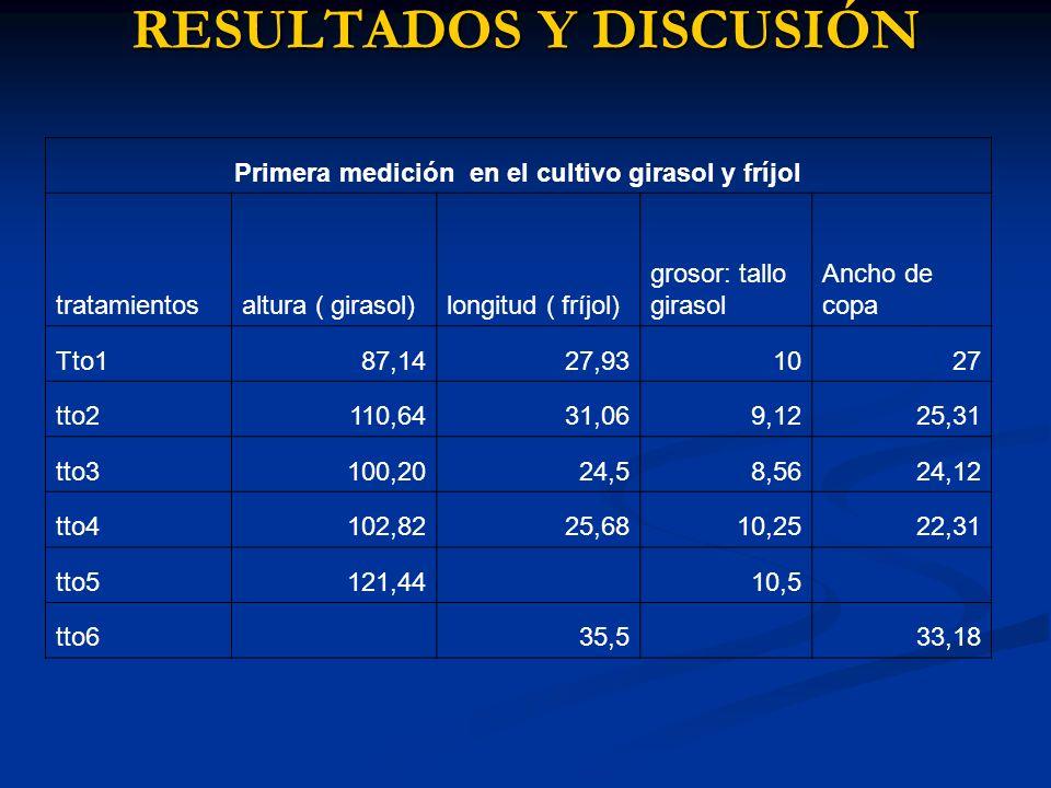 RESULTADOS Y DISCUSIÓN Primera medición en el cultivo girasol y fríjol tratamientosaltura ( girasol)longitud ( fríjol) grosor: tallo girasol Ancho de