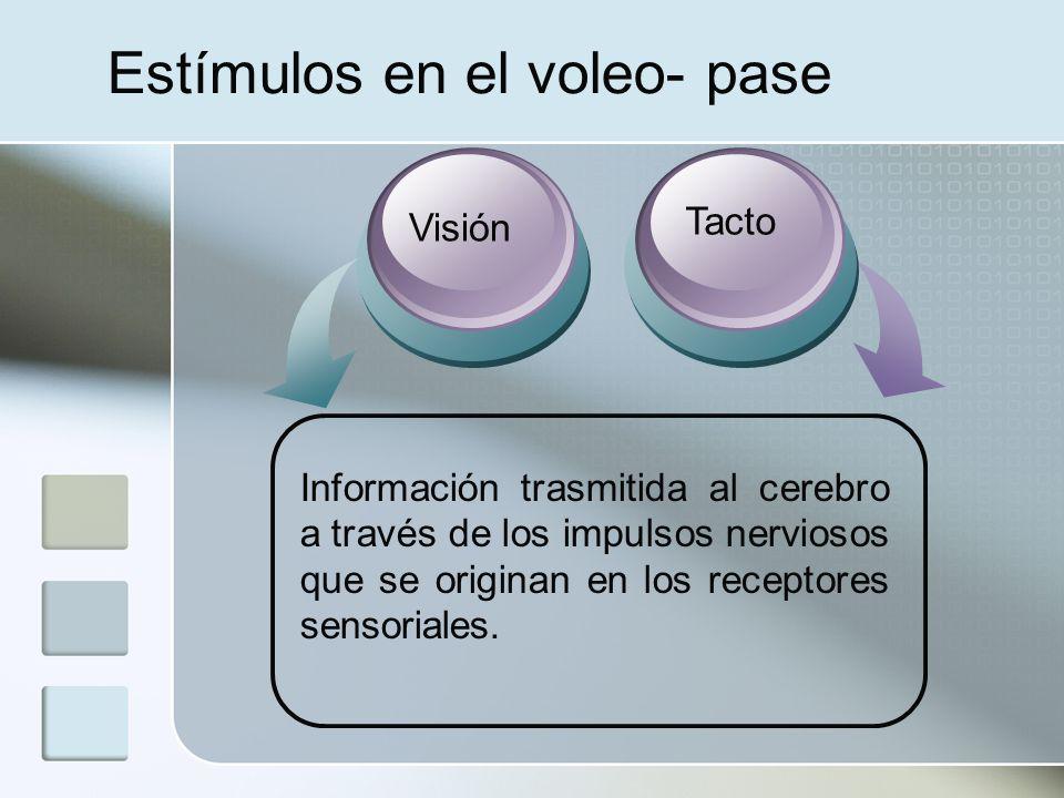 Receptores sensoriales El corpúsculo de Paccini que se halla en las profundidades de los tejidos.