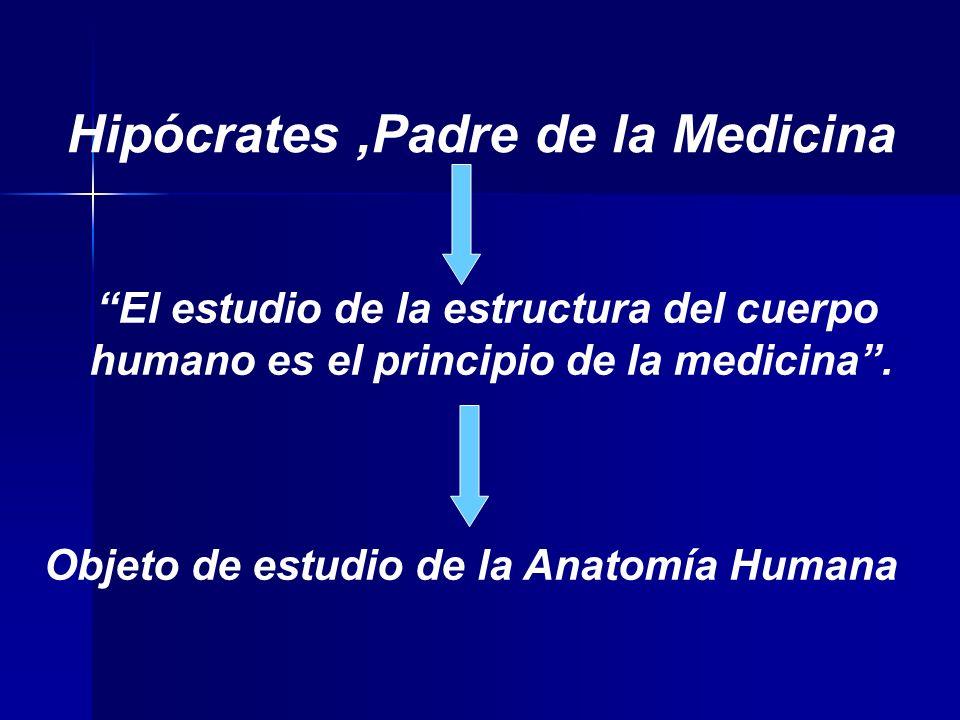 Hipócrates,Padre de la Medicina El estudio de la estructura del cuerpo humano es el principio de la medicina.