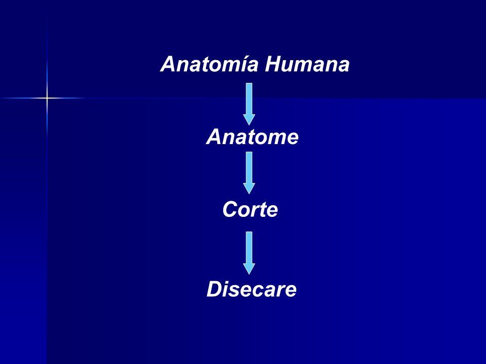 Anatomía Humana Anatome Corte Disecare