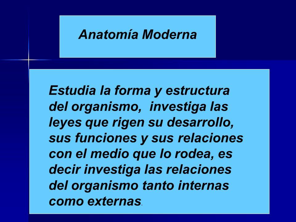 Anatomía Moderna Estudia la forma y estructura del organismo, investiga las leyes que rigen su desarrollo, sus funciones y sus relaciones con el medio que lo rodea, es decir investiga las relaciones del organismo tanto internas como externas.