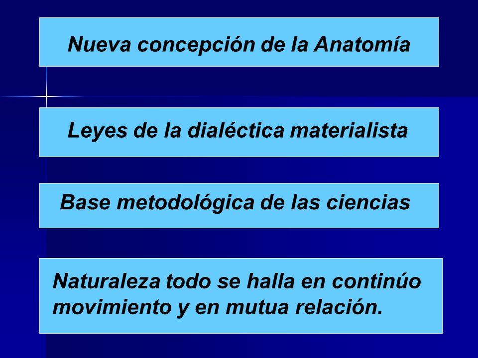Nueva concepción de la Anatomía Leyes de la dialéctica materialista Base metodológica de las ciencias Naturaleza todo se halla en continúo movimiento y en mutua relación.