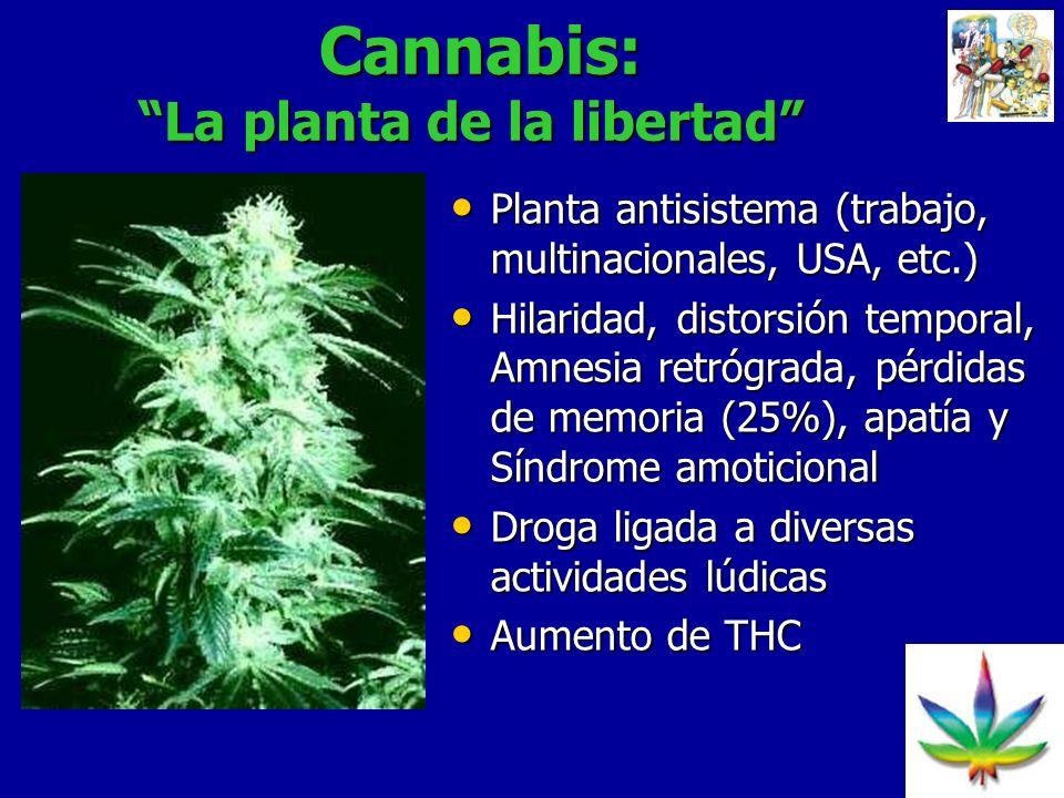 22 Cannabis: La planta de la libertad Cannabis: La planta de la libertad Planta antisistema (trabajo, multinacionales, USA, etc.) Planta antisistema (