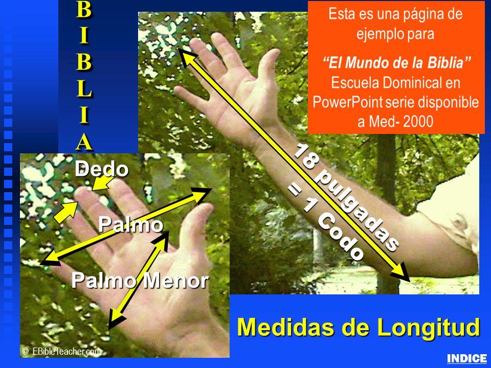 18 pulgadas = 1 Codo = 1 Codo n Medidas de Longitud BIBLIBIBLIAABIBLIBIBLIAAA BIBLIBIBLIAABIBLIBIBLIAAA Palmo Palmo Menor Dedo © EBibleTeacher.com Est