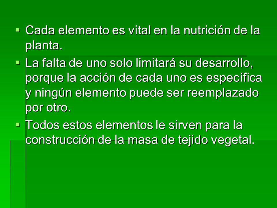 Cada elemento es vital en la nutrición de la planta. Cada elemento es vital en la nutrición de la planta. La falta de uno solo limitará su desarrollo,