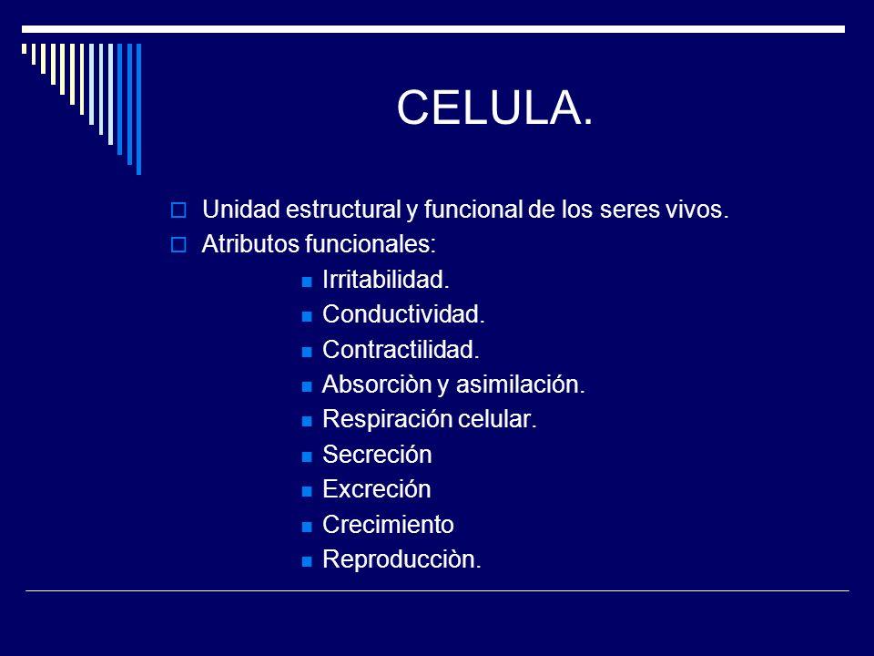 CELULA. Unidad estructural y funcional de los seres vivos. Atributos funcionales: Irritabilidad. Conductividad. Contractilidad. Absorciòn y asimilació