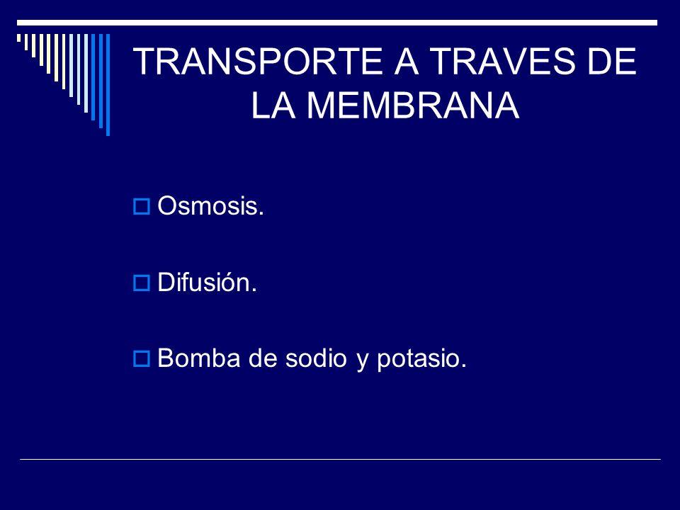 TRANSPORTE A TRAVES DE LA MEMBRANA Osmosis. Difusión. Bomba de sodio y potasio.