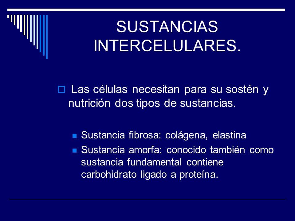 SUSTANCIAS INTERCELULARES. Las células necesitan para su sostén y nutrición dos tipos de sustancias. Sustancia fibrosa: colágena, elastina Sustancia a
