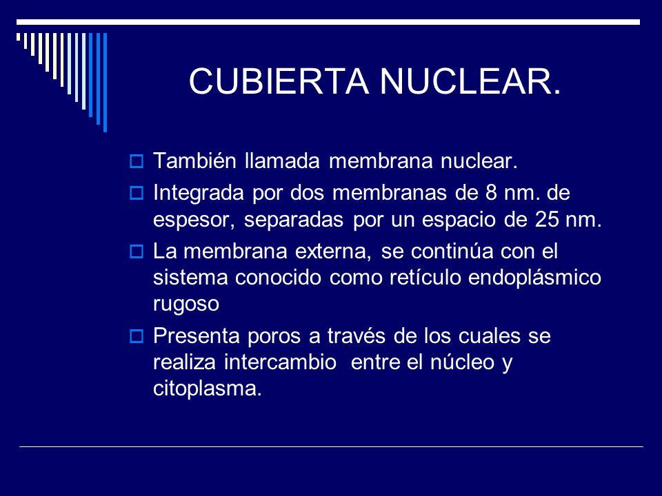 CUBIERTA NUCLEAR. También llamada membrana nuclear. Integrada por dos membranas de 8 nm. de espesor, separadas por un espacio de 25 nm. La membrana ex