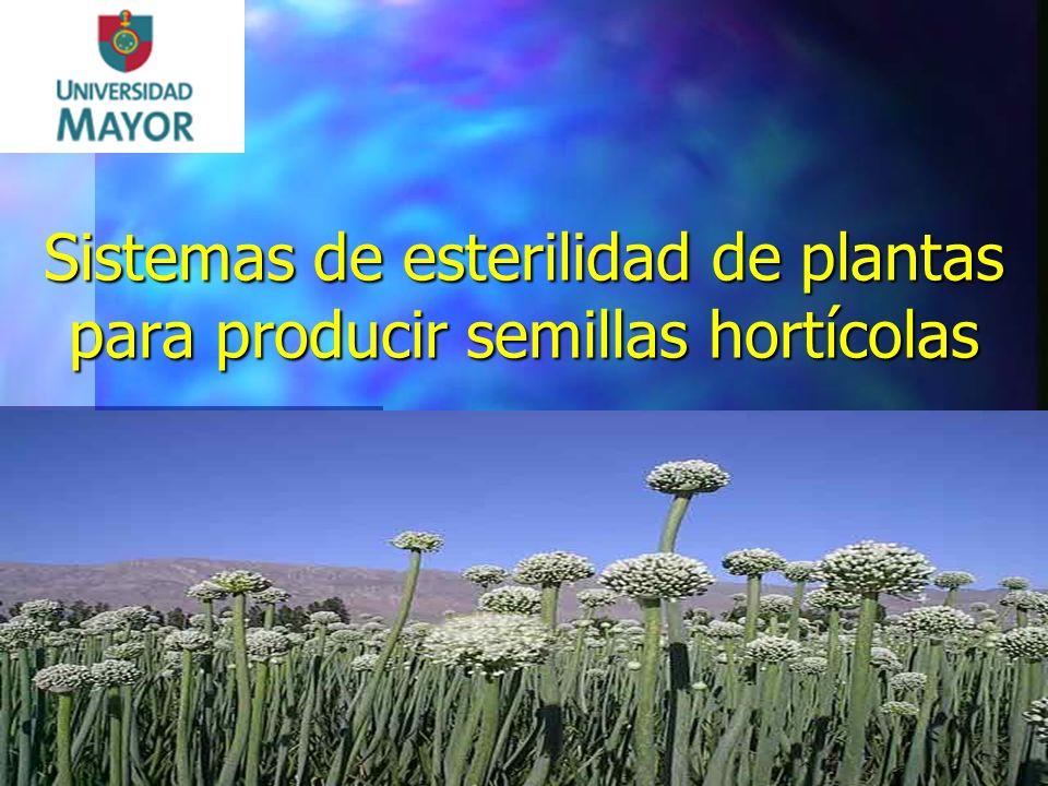 Sistemas de esterilidad de plantas para producir semillas hortícolas