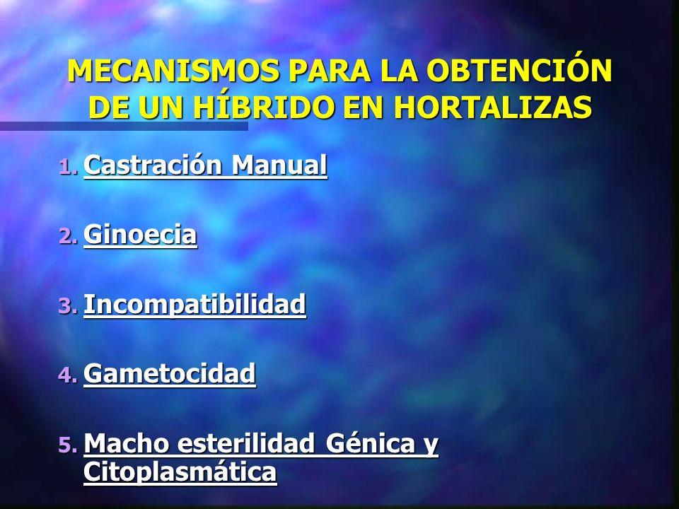MECANISMOS PARA LA OBTENCIÓN DE UN HÍBRIDO EN HORTALIZAS 1. Castración Manual 2. Ginoecia 3. Incompatibilidad 4. Gametocidad 5. Macho esterilidad Géni