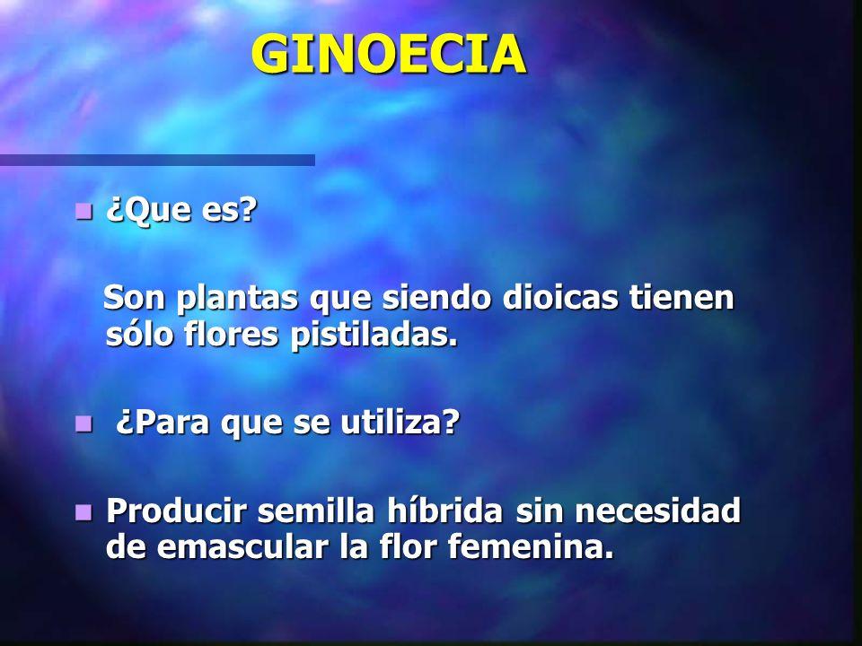 GINOECIA ¿Que es? ¿Que es? Son plantas que siendo dioicas tienen sólo flores pistiladas. Son plantas que siendo dioicas tienen sólo flores pistiladas.