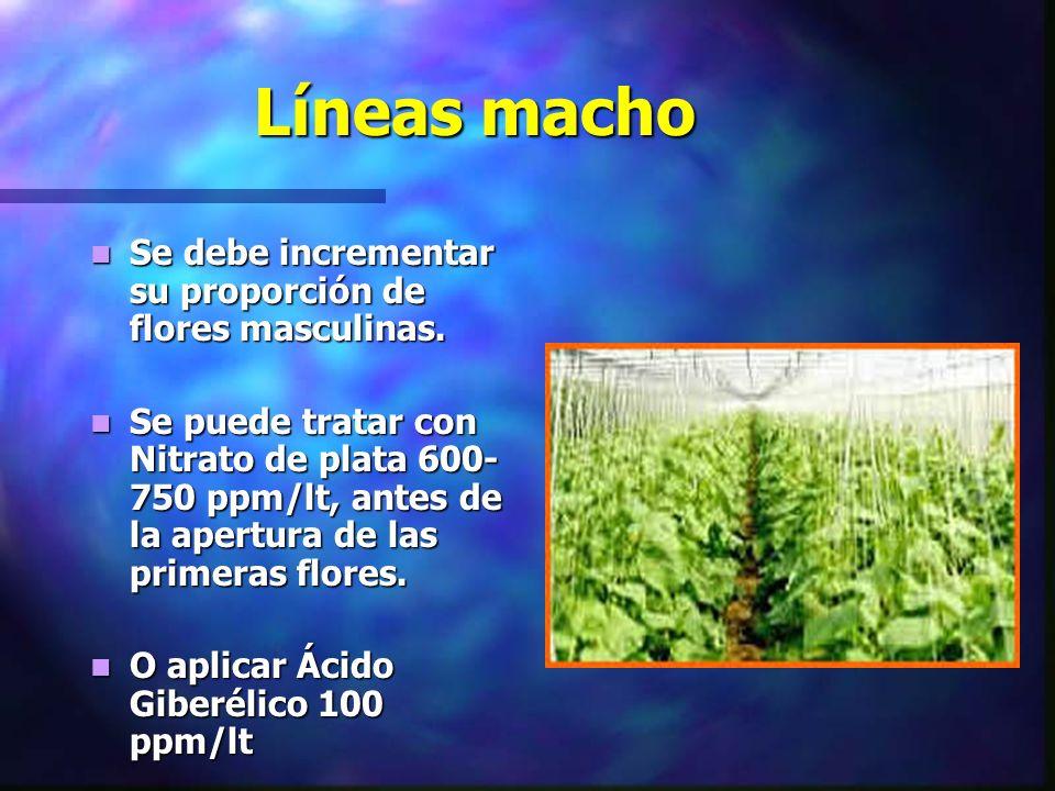 Líneas macho Se debe incrementar su proporción de flores masculinas. Se debe incrementar su proporción de flores masculinas. Se puede tratar con Nitra